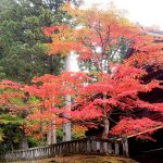 Fall Festival Ideas in Tokyo